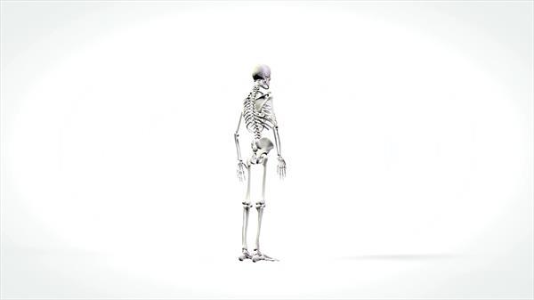 人体骨架结构三百六十度旋转展示实拍高清视频素材