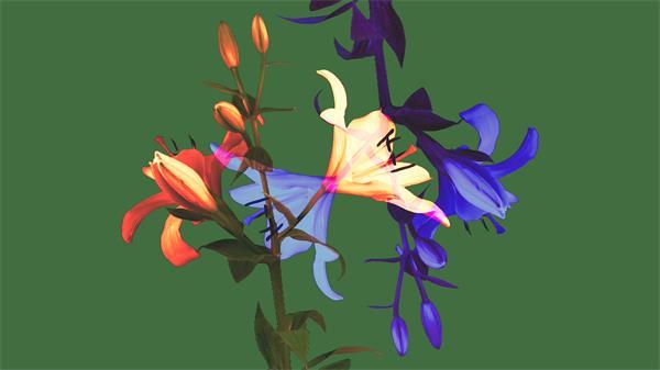 俏麗綻放百合花動畫花朵魅力展現動態視頻素材