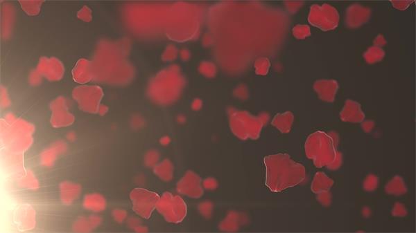 美轮美奂红?#20498;?#33457;瓣碎片飘落背景视频素材