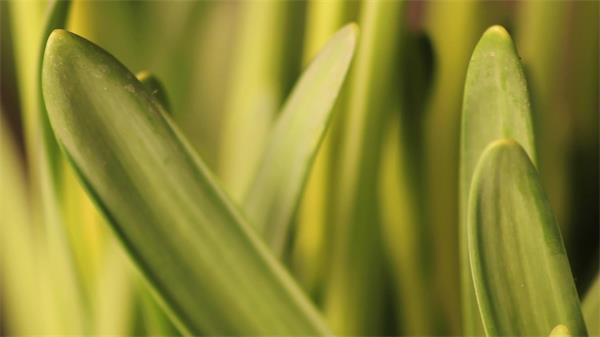近距离焦距花茎自然植物风景群实拍高清视频素材