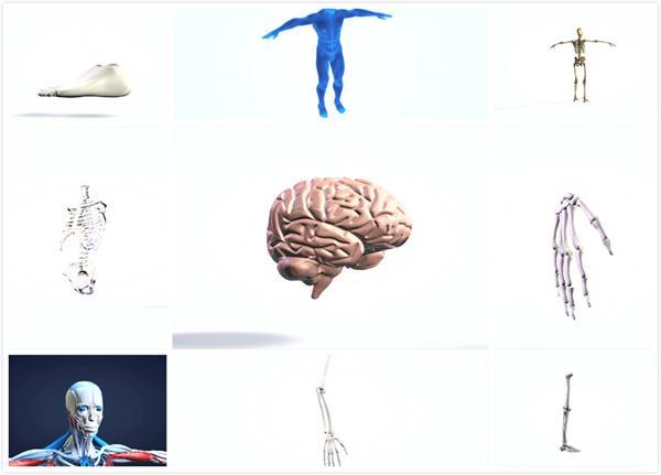 3D平面科技构建人体架构元素医学研讨视频素材包