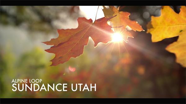 美轮美奂大自然红叶枫树群小溪流水万物生长实拍高清视频素材