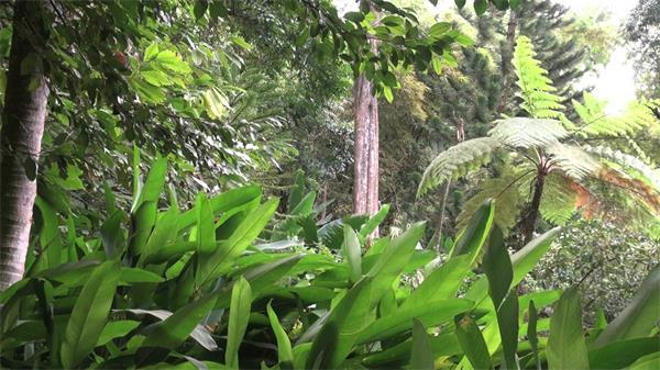 茂盛森林阳光明媚绿叶摇晃自然环境实拍高清视频素材
