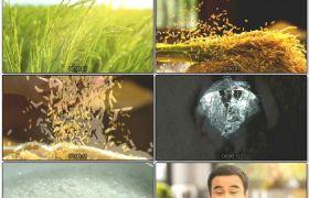 青翠色稻田成熟稻谷手捧米粒无机农业米饭煮熟进程高清视频实拍