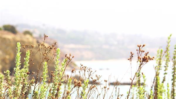 [4K]海岸自然风景小草变焦拍摄间接映射出美丽海景高清视频实拍