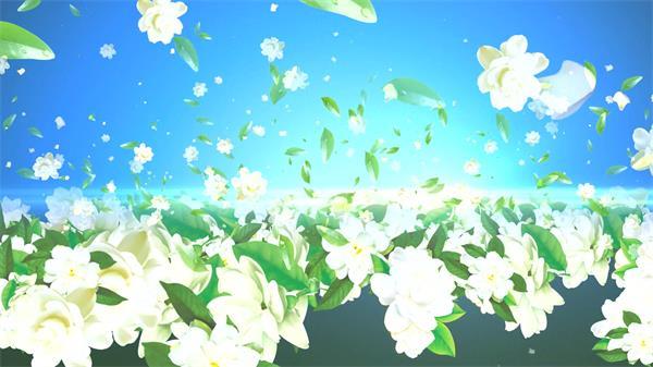 清新唯美半透明茉莉花绿叶飘浮创意画面视觉宣传背景视频素材