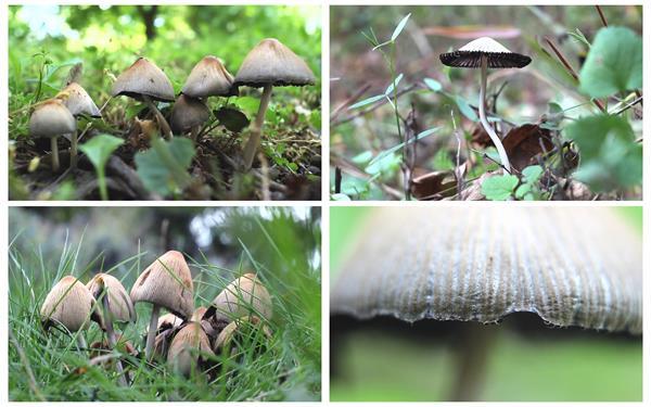 野生蘑菇生长空间菌类植物自然生长在潮湿阴暗地方高清视频实拍