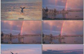 晚霞海鸥海平面上飞翔下水休息一群海鸥贴海飞翔高清视频实拍