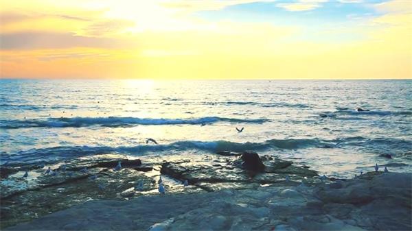 碧海蓝天海鸥日落浪花沙滩实拍高清视频素材