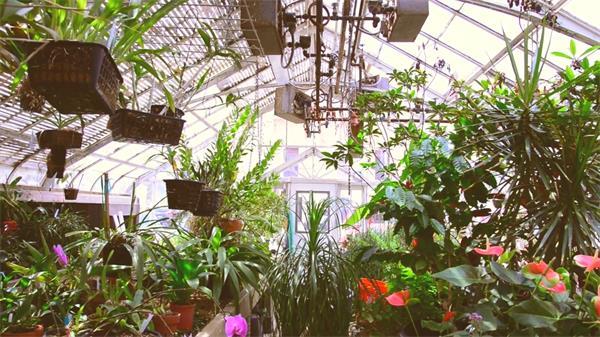 玻璃屋温室盆栽动物鲜花莳植告白实拍高清视频素材