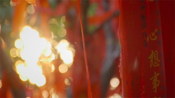 阳光照耀愿望树悬挂红色愿望飘带实拍高清视频素材