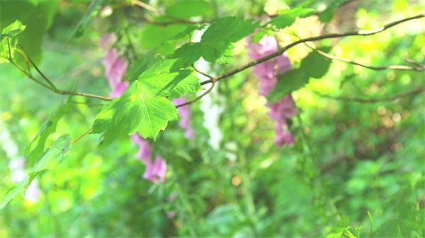 清新阳光照射青翠森林间变焦拍摄动物花朵天然风景高清视频实拍