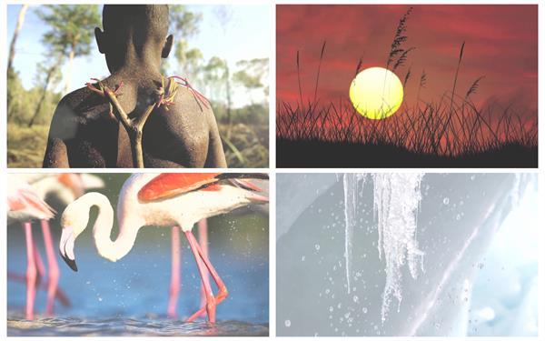 动感逼真3D图片运动动物慢动作日落人物特写高清视频实拍