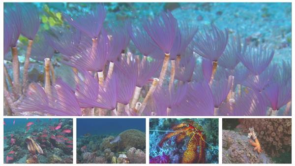 新奇海底世界珊瑚鱼类动物生活海草海底生态圈保护高清视频实拍