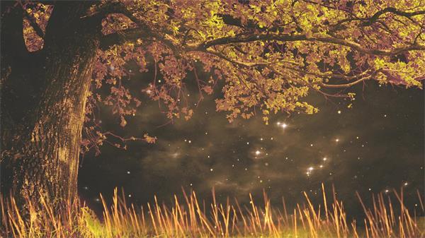 唯美夜晚树下仰视星光小草摆动萤火虫飞翔华美配景视频素材