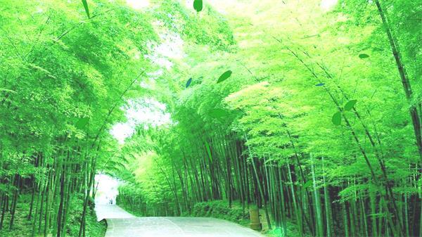 清新创意虚实结合场景绿油油树木画面树叶飘落树林背景视频素材