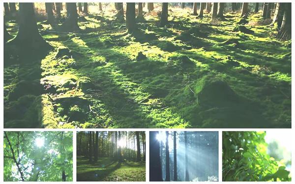 超赞阳光普照大地穿透树木映射视觉效果唯美画面高清视频实拍