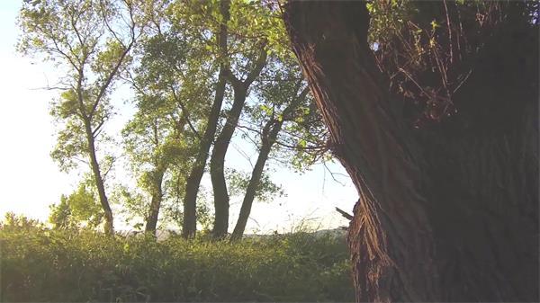 大自然树木优雅特写风吹摇摆环境保护森林阳光高清视频实拍