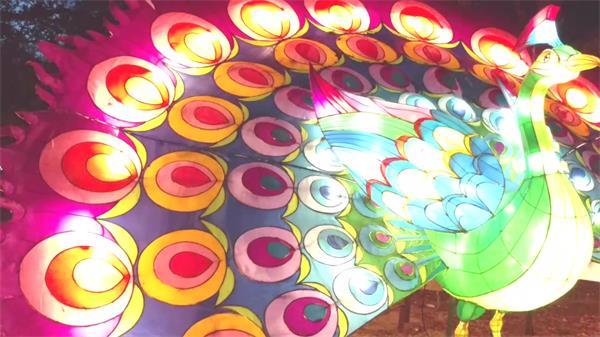 中国传?#36710;?#20809;节艳丽多彩孔雀闪烁灯光效果变幻高清视频实拍