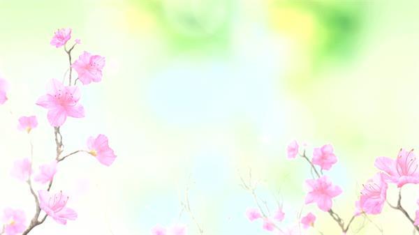 粉紅色桃花唯美生長綻放意境畫面夢幻中國風屏幕背景視頻素材