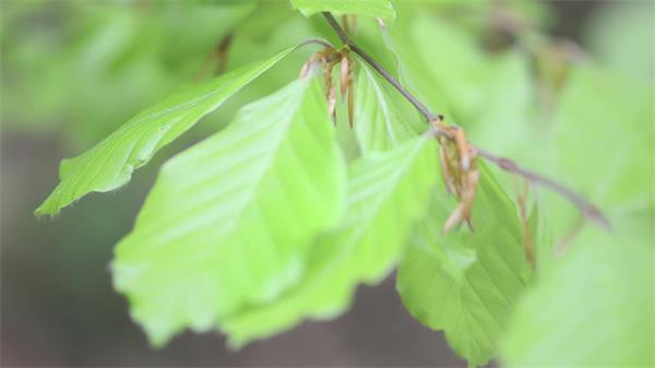 植物生长翠绿叶子微距特写拍摄自然风景高清视频实拍