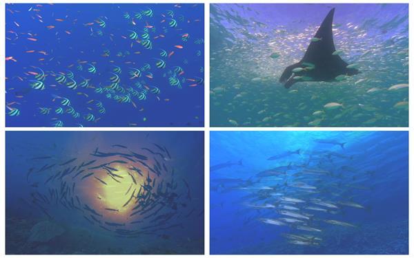 奇幻海底世界魚群海底生活游動小魚珊瑚特寫海底高清視頻實拍