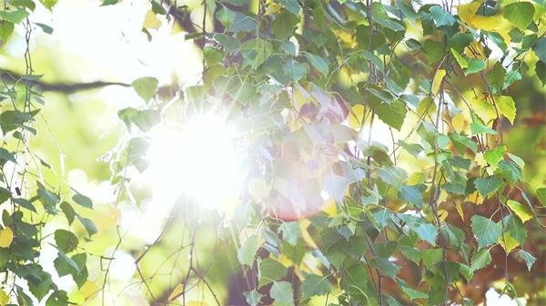 灿烂阳光穿透叶子强光照射丛林植物生长唯美画面高清视频拍摄