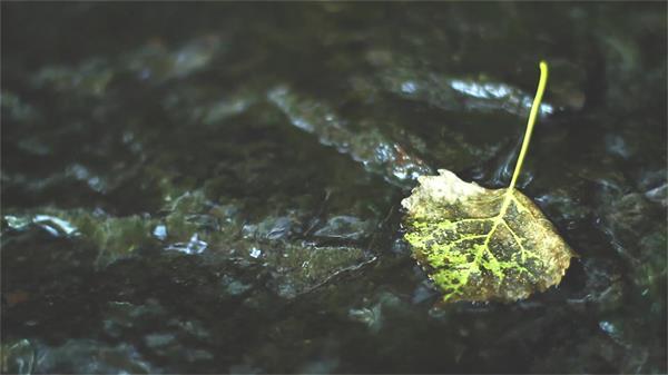 清新秀丽小河流树叶掉落河流中大自然景色高清视频实拍