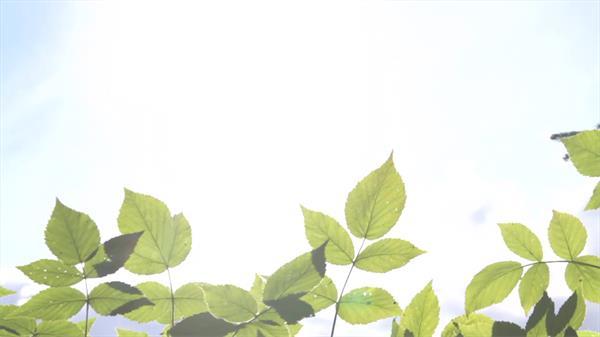阳光照射树叶通透翠绿植物生长自然景色镜头移动高清视频实拍