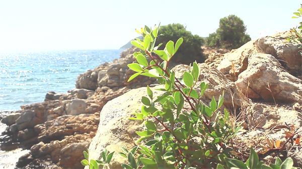美好阳光小岛屿拍摄草类植物生长海水冲击岩石高清视频实拍