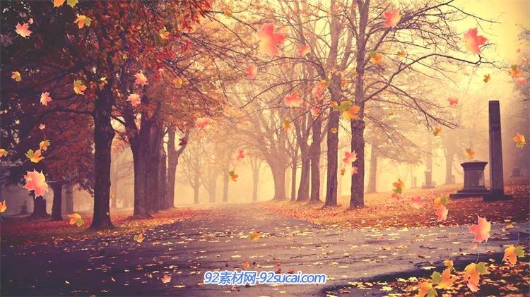 壁纸 风景 森林 桌面 750_421图片