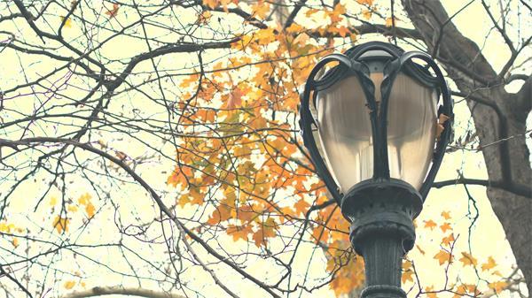 唯美秋季公园风景灯柱树叶完善渲染秋景象味镜头过渡高清视频实拍