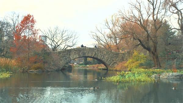 清新园林景色鸭子河道上游泳古典历史小桥惬意风景高清视频拍摄