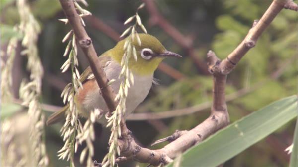 小鸟树枝上观察寻找觅食大自然生态系统植物高清视频实拍