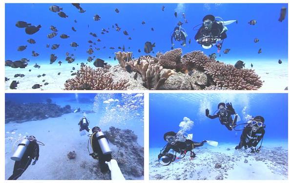 超高清海底世界潜水员观察唯美海洋珊瑚小鱼群旅游景点高清视频拍