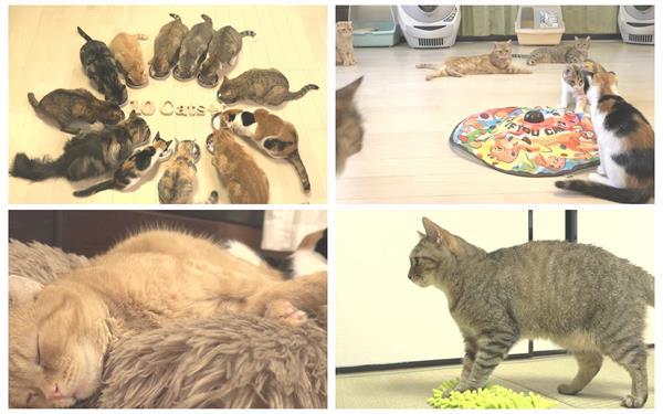 [4K]心爱小猫收养所游玩睡觉吃猫粮姿势特写植物生存高清视频实拍
