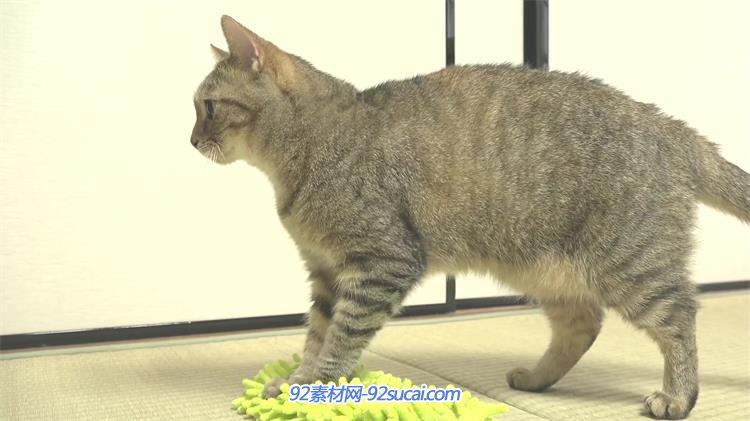 [4k]可爱小猫收养所玩耍睡觉吃猫粮姿态特写动物生活高清视频实拍