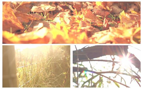 唯美清新自然落叶小草树木植物生长景色画面高清视频实拍
