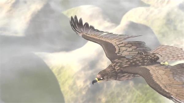 翱翔天空雄鹰空中英姿云层渲染大气宏图展现动物生活高清视频拍摄