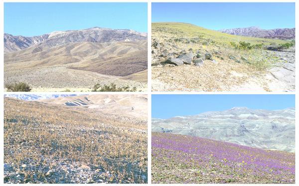 春天到来植物活力生长荒地渐变绿地变化过程高清视频延时拍摄