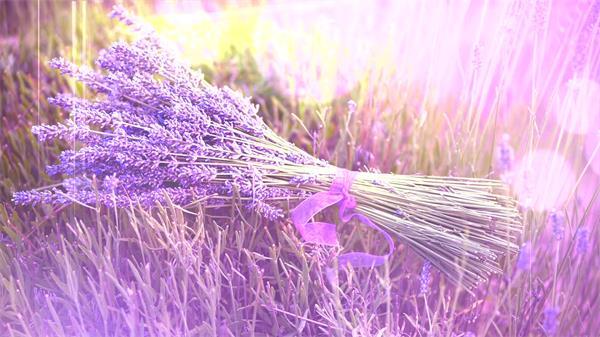 浪漫紫色薰衣草花海花束光点渲染鲜花特写高清视频实拍
