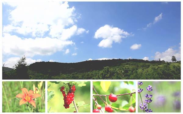 大自然植物生长野生浆果昆虫鲜花盛开森林风光风景特写高清视频实