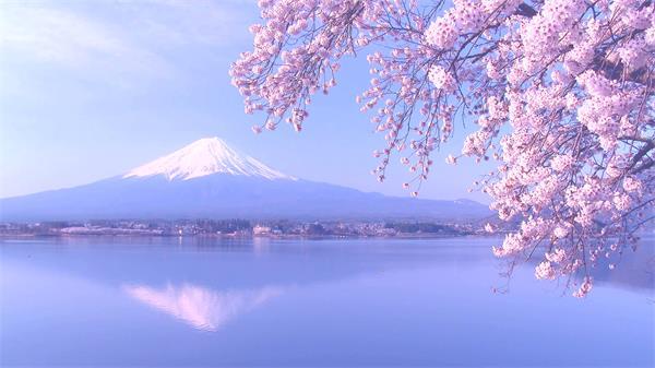 日本旅游樱花与富士山昼夜唯美风光景色片高清视频实拍
