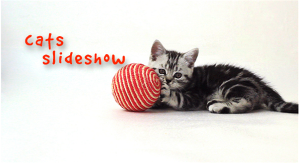 AE模板 可爱活泼蓬松小猫围绕照片框架动态镜头幻灯片模板 AE素材