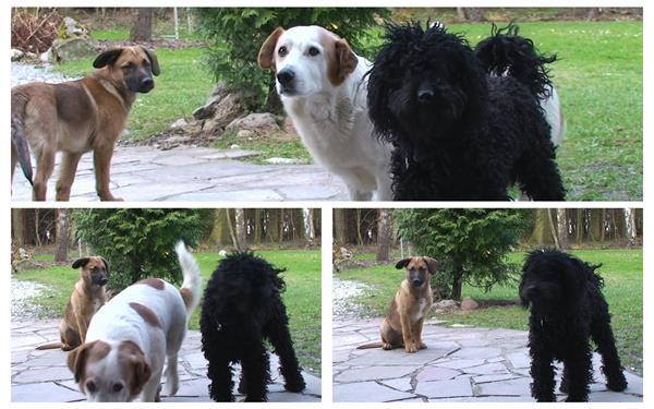 三只可爱小狗家里后花园公园玩耍坐立动物镜头特写高清视频拍摄