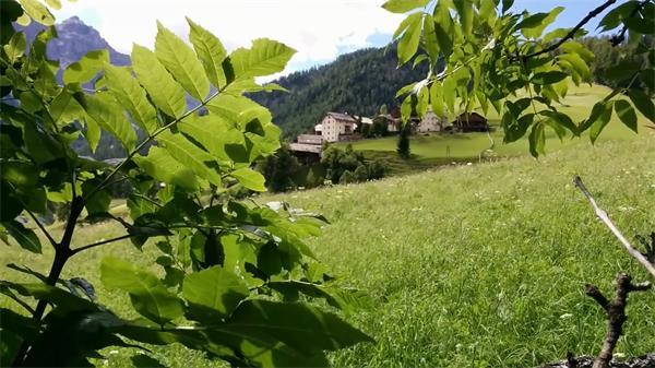 绿油油草地树木摇曳山顶远景村庄风景建筑清视频实拍