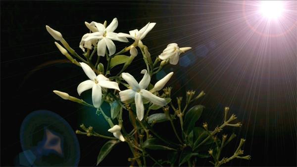 3D假造构建鲜花动物阳光照射光合作用花朵怒放LED配景视频素材