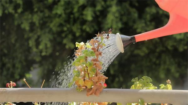 阳光照耀植物屹立晒水壶清水喷洒淋湿植物记录高清视频实拍