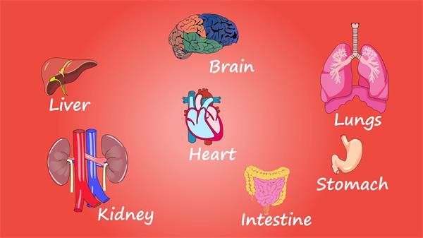 儿童知识培养身体内脏分析学习构建人体成分动画高清视频素材