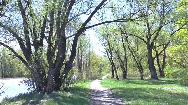 春天万物生长万物复苏森林公园河流绿树成荫植物生长高清视频实拍